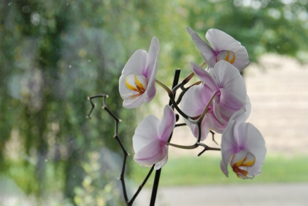 Blog Orchidee